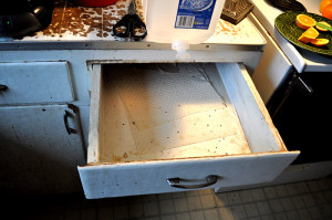 daily mice feces in kitchen drawer - Copy (2)
