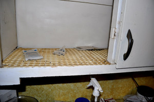 mice feces in cupboard - Copy