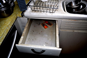 mice feces in k drawer - Copy